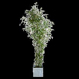 Bambou 1,9 m avec cache-pot en zinc
